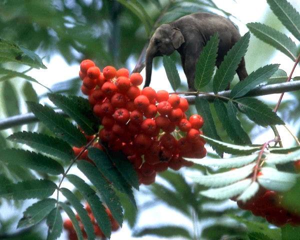 Éléphant sur une branche