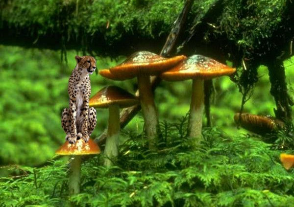 Léopard miniature dans une forêt de champignon