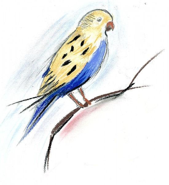 Oiseau jaune et bleu au pastel 2