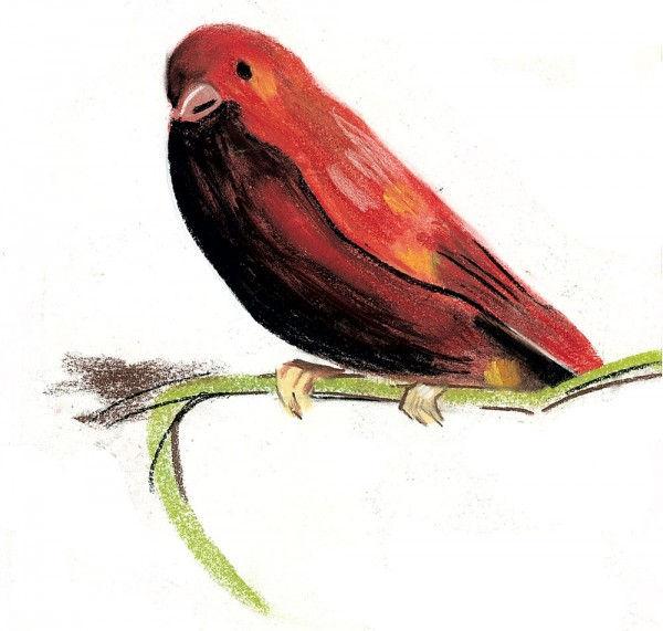 Oiseau rouge au pastel 4