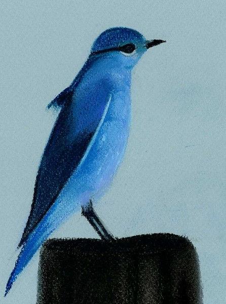 Oiseau au pastel 5