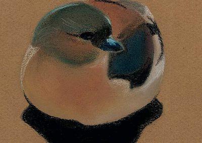 Oiseau au pastel 6