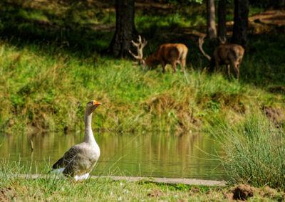 Parc Naturel de Boutissaint 10