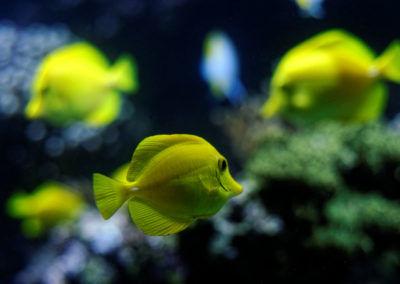 Poissons -Aquarium de la Rochelle